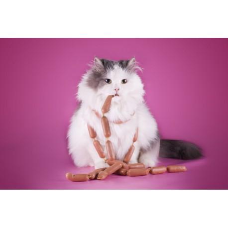Faire perdre du poids à un chat avec catapart.fr